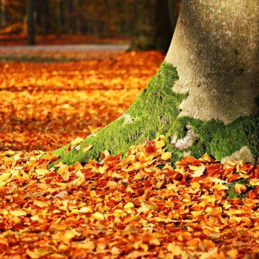 Herfst en de magie van de seizoenen